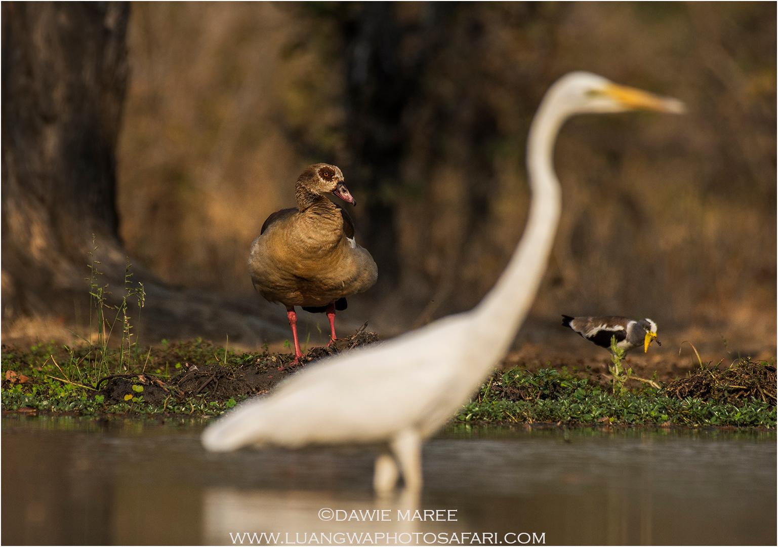 Photography safaris