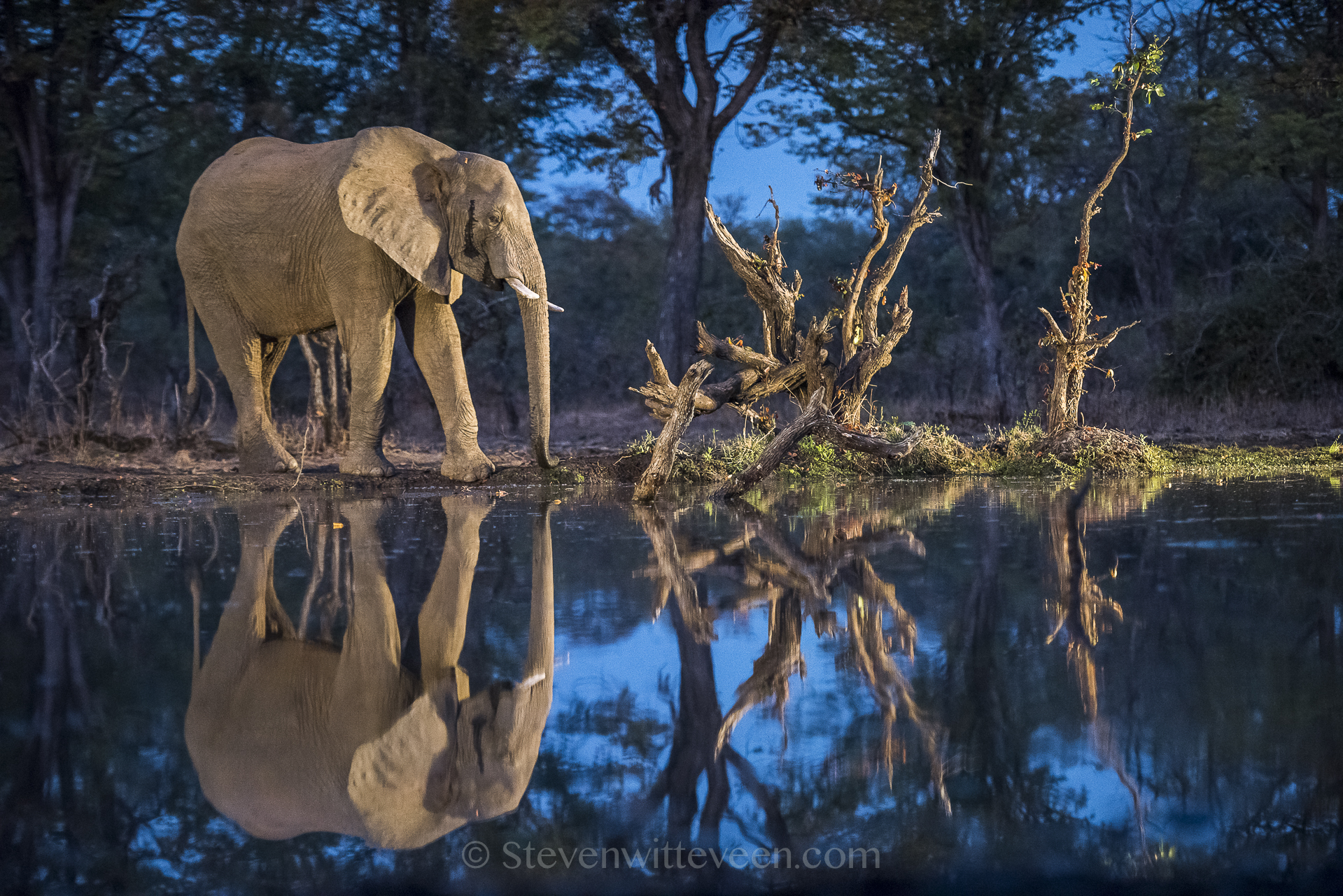Elephant reflection | wildlife photography safari