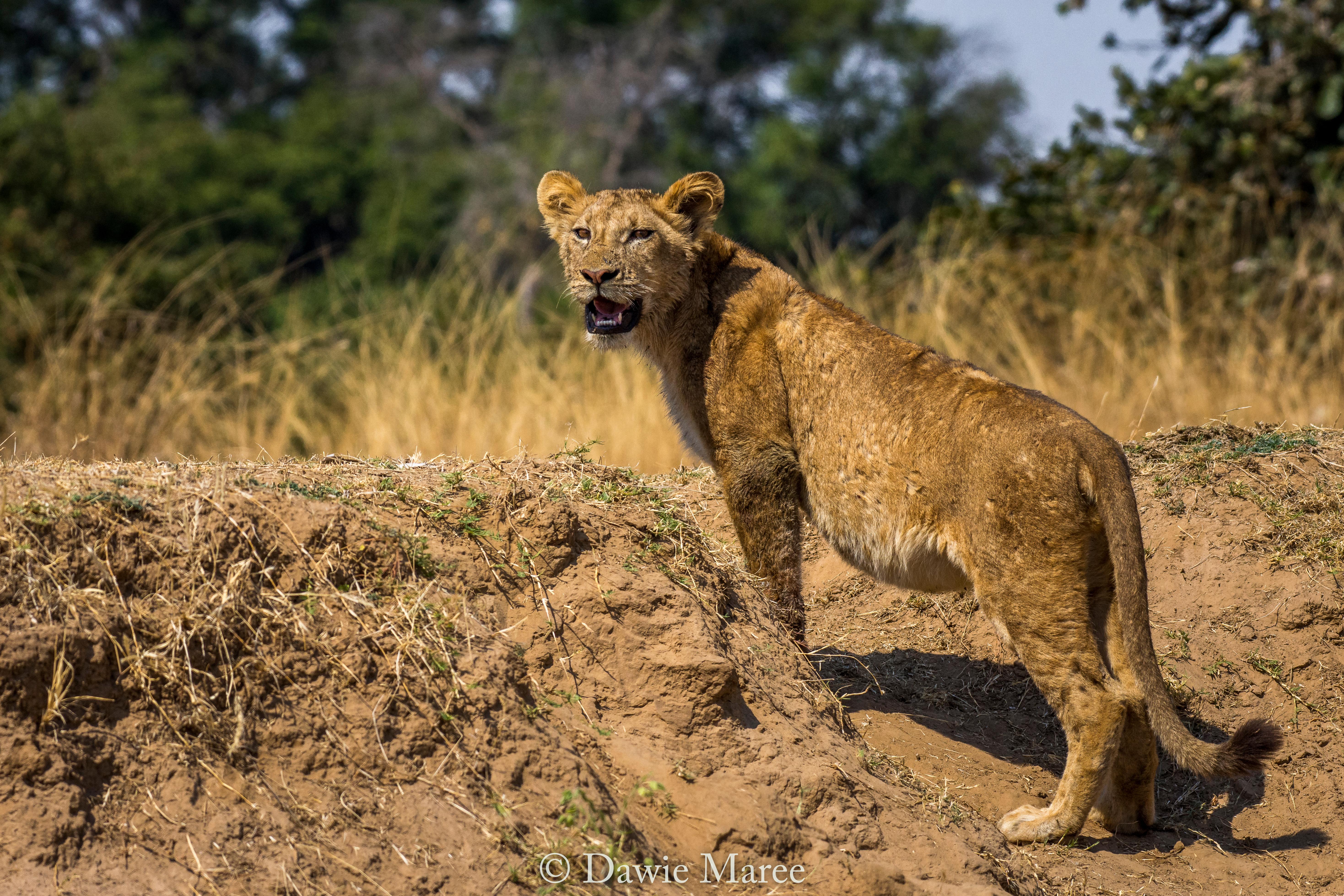 Safari southern africa tour